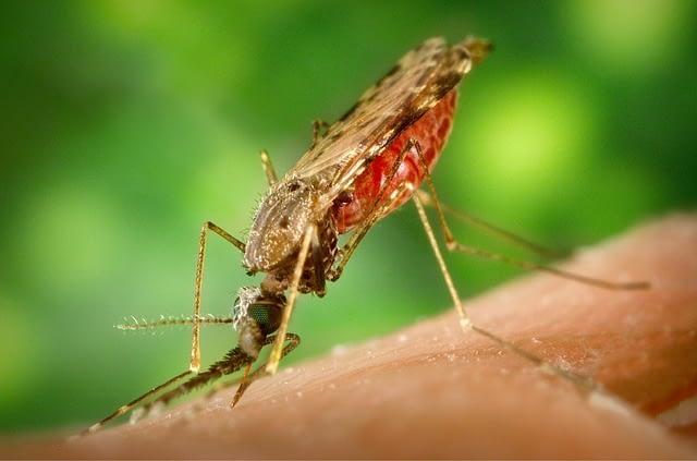 יתושים הדברה